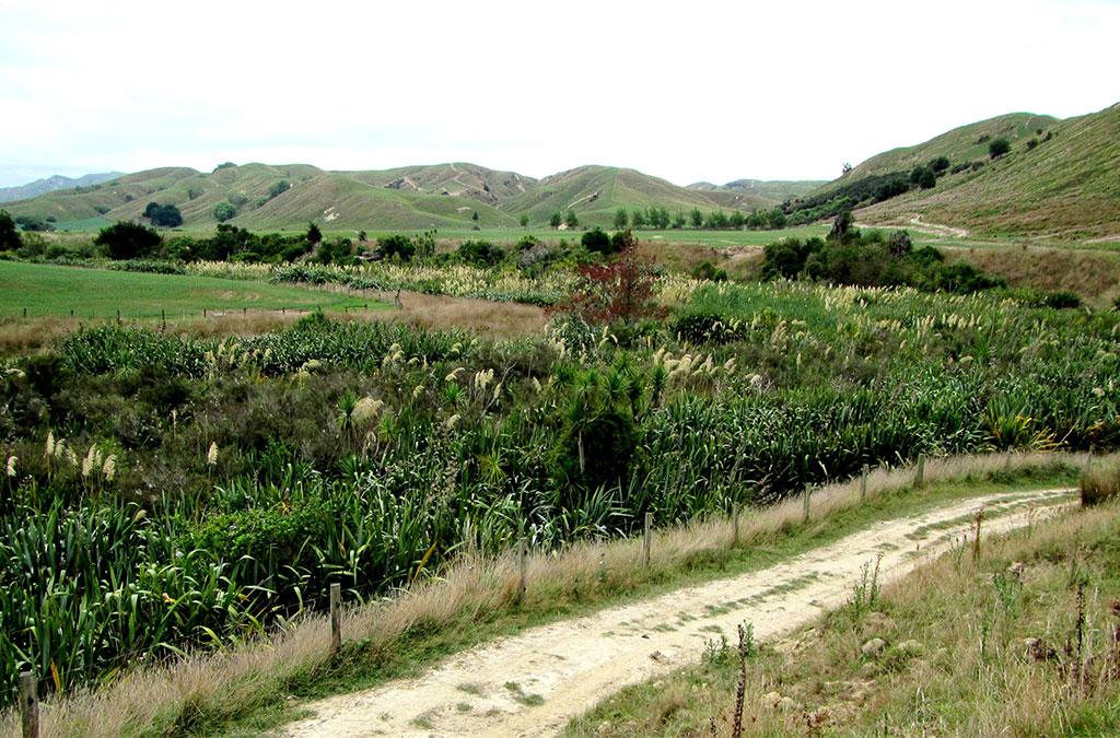 Kohinui Road Oxbow