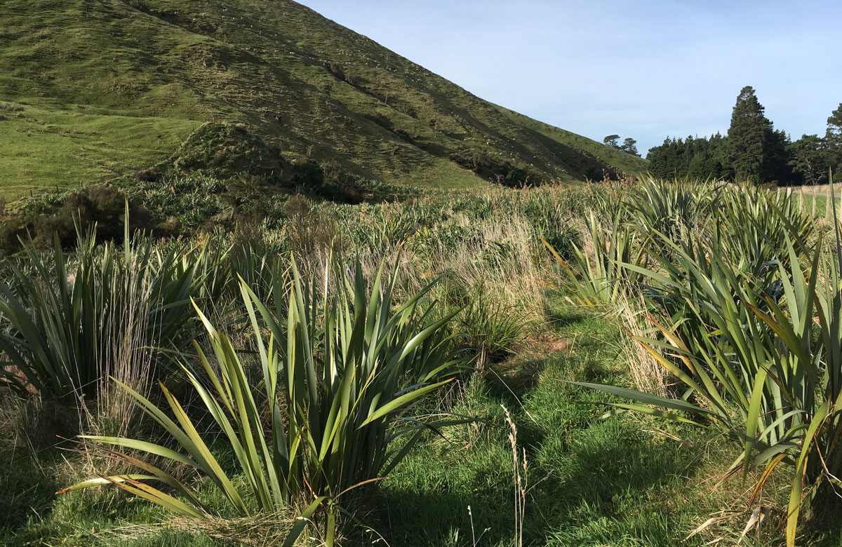 Photo of planting at Ngāmoko | Norsewood near the source of the Manawatū River